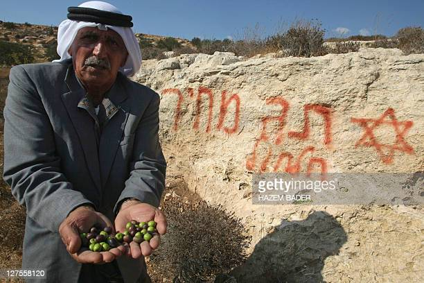 Palestinian farmer Mussa Samamreh holds olives from his destroyed trees that local residents say were broken and uprooted by Jewish settlers from a...
