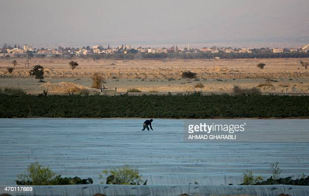 A Palestinian farmer works in field the near the West Bank town of Jericho on February 18 2014 AFP PHOTO/ AHMAD GHARABLI
