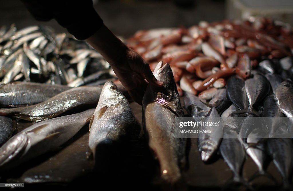 Palestinian fishermen sell fish on the beach front after their return from the sea in Gaza City on January 23, 2013. Palestinian fishermen have restricted access to the sea and are closely monitored by Israeli naval forces which regularly fire warning shots at fishing boats off the coast of the blockaded Gaza Strip.