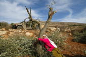 Palestinian Mahfoza Oude cries as she hugs one of her olive trees in the West Bank village of Salem 27 November 2005 Mahfoza and other villagers lost...