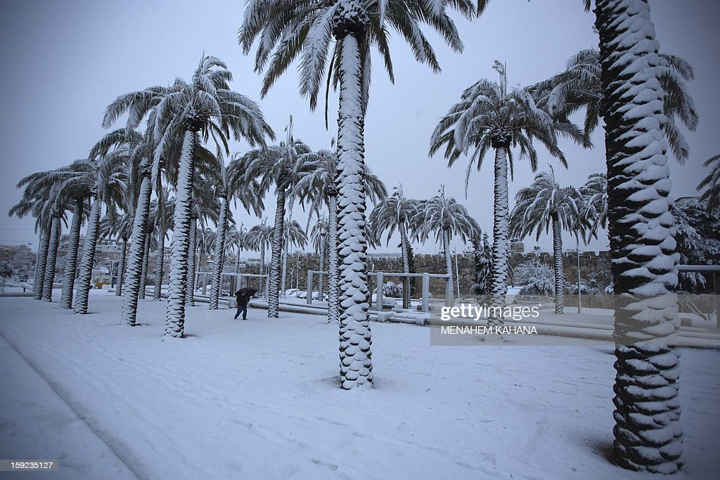 A Palestinian man walks near palm trees as snow falls in Jerusalem's old city on January 10, 2013. Jerusalem was transformed into a winter wonderland after heavy overnight snowfall turned the Holy City and much of the region white, bringing hordes of excited children onto the streets.