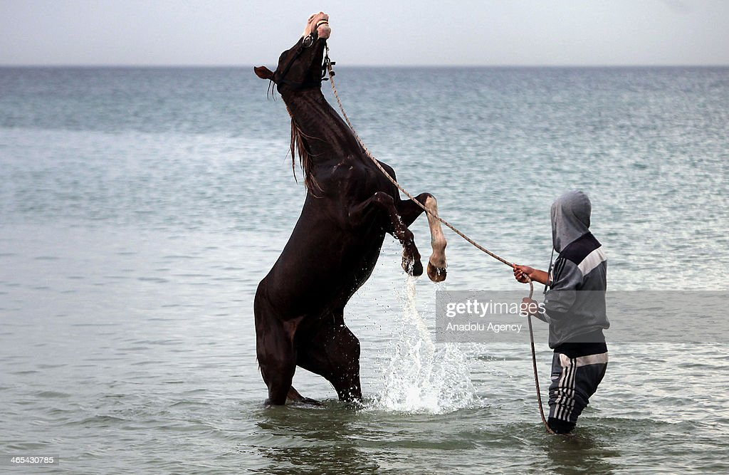 Palestinian riders wash their horses at Deir al-Balah costline after rain stopped on January 27, 2014 in Gaza City, Gaza. The horse rears up.