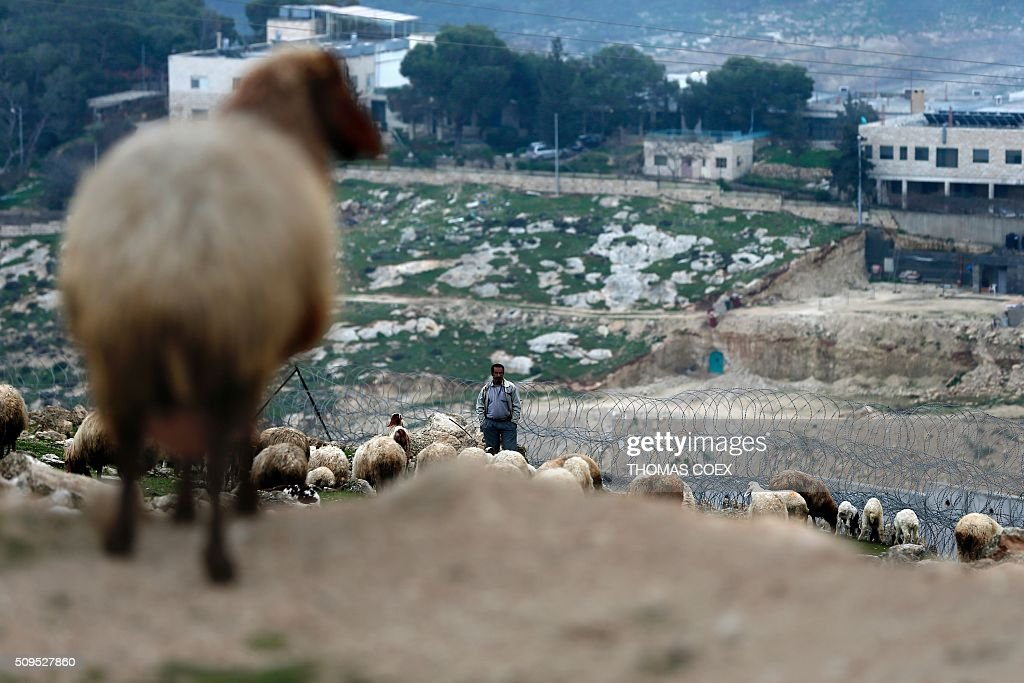 A Palestinian sheperd watches his sheep near Israel's controversial separation barrier dividing the Palestinian neighbourhood of Al-Tur in the Israeli annexed East Jerusalem with the West Bank, on February 11, 2016. / AFP / THOMAS COEX