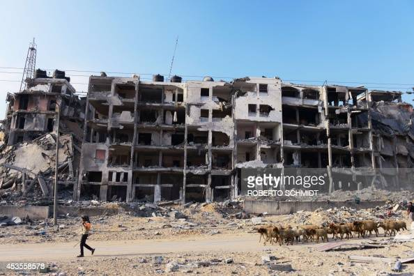 A Palestinian shepherd leads his flock of sheep past an apartment complex that was heavily damaged in fighting between Israel and Hamas during over 4...