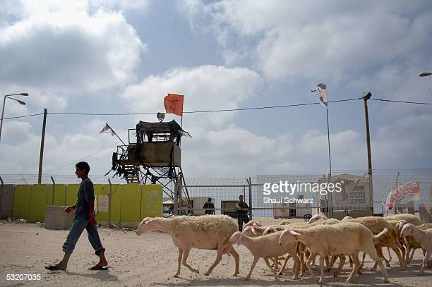 Palestinian teenager walks his sheep in front of the gate of Shirat Hayam settlement in the alMawasi area an enclave enclosed by the Jewish Gush...