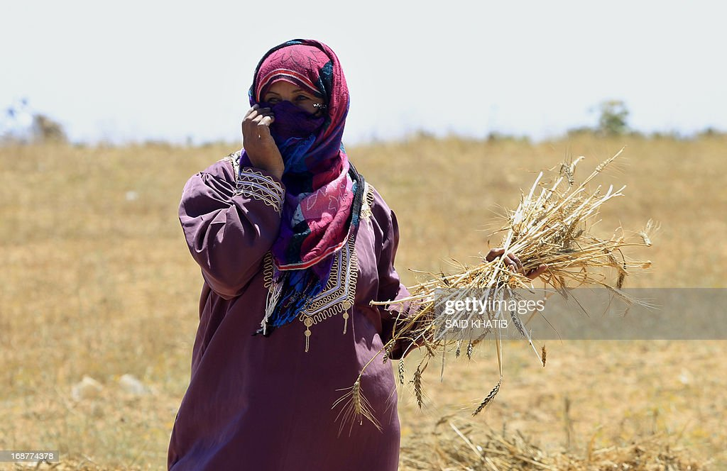 A Palestinian woman holds ears of wheat as members of a family harvest their field during the annual harvest season outside the Khan Yunis refugee camp in the southern Gaza Strip on May 15, 2013.