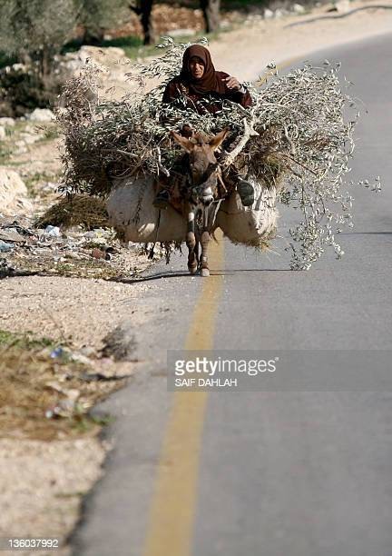 A Palestinian woman rides her Donkey carrying collected bushes to burn for warmth on the roadside of an Israeli settlement near the West bank city of...