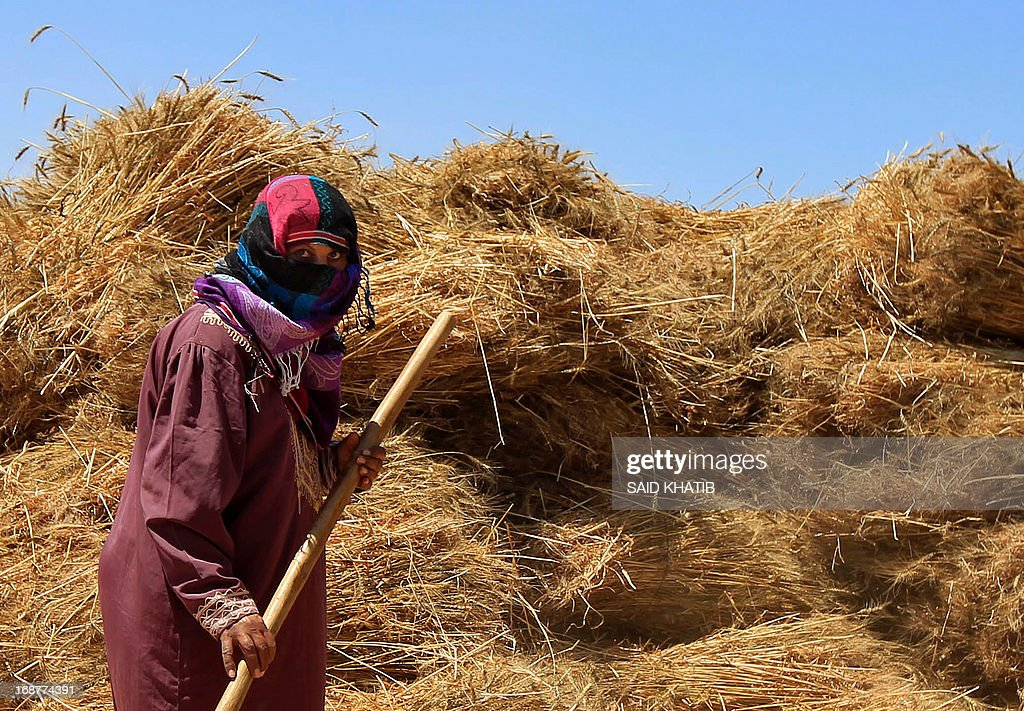 A Palestinian woman stands in front of bailes of wheat as members of a family harvest their field during the annual harvest season outside the Khan Yunis refugee camp in the southern Gaza Strip on May 15, 2013.