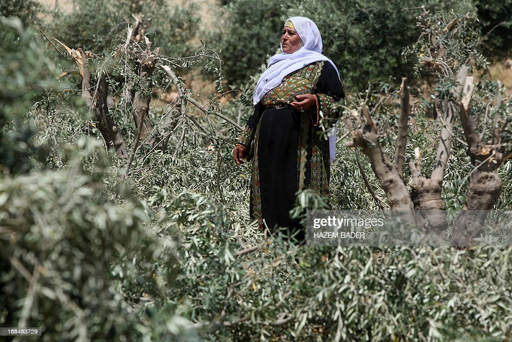 A Palestinian woman stands near olive trees damaged by vandals in a Palestinian-owned plantation the village of Al-Tiwana, south of the West Bank city of Hebron on May 10, 2013. Vandals believed to be Jewish extremists have uprooted dozens of olive trees and scrawled graffiti near a Palestinian village in the southern West Bank, police and witnesses said.