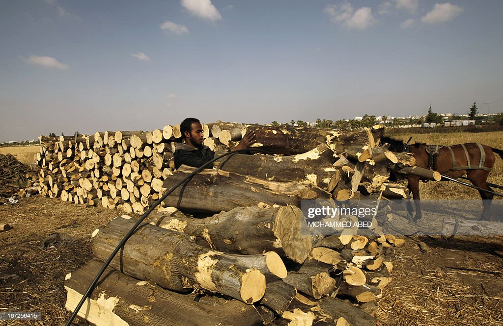 A Palestinian worker collects wood at one of the few local charcoal manufacturing plants east of Gaza City on April 23, 2013. AFP PHOTO/MOHAMMED ABED