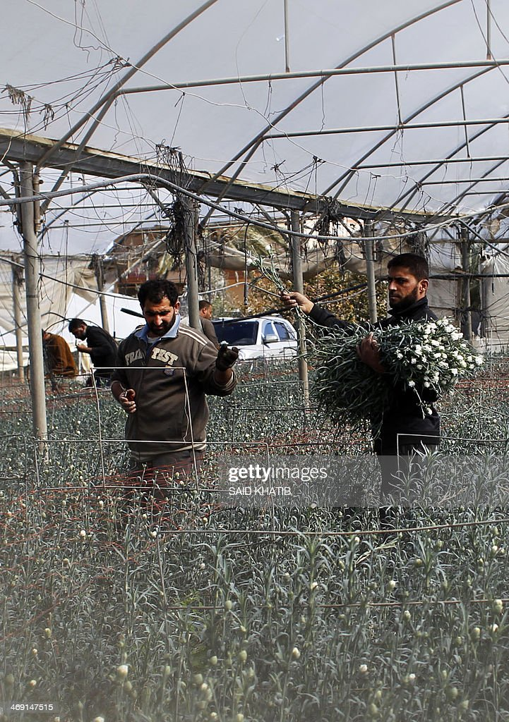 Palestinian workers dismantle greenhouses that were used by Israeli  settlers in the Gush Katif settlement bloc