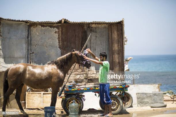 Palestinian young man uses a plastic bottle to wash his horse during a heatwave at alShati refugee camp in Gaza City on July 2 2017 / AFP PHOTO /...
