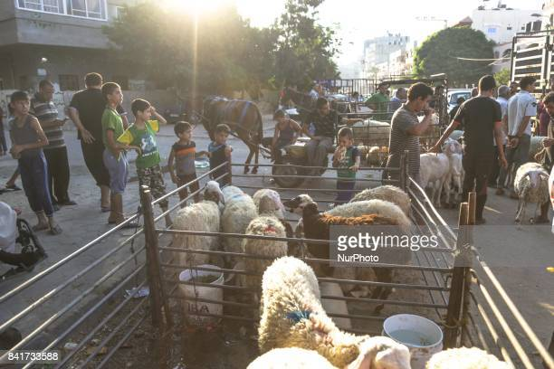 Palestinians children play near sacrificial animals in a market ahead of Eid alAdha celebrations in the northern Gaza Strip 31 August 2017 Eid alAdha...