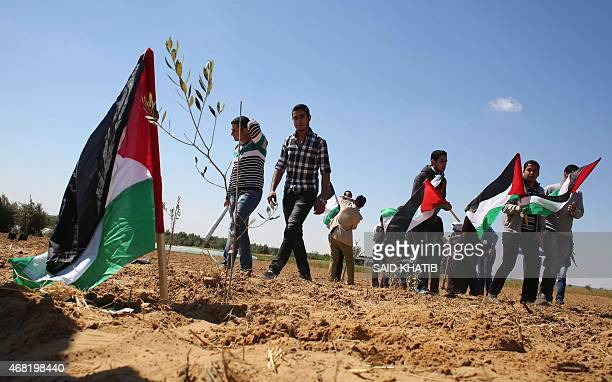 Palestinians hold their national flag as they plant olive trees to mark Land Day during a symbolic ceremony held in the village of Abassan east of...