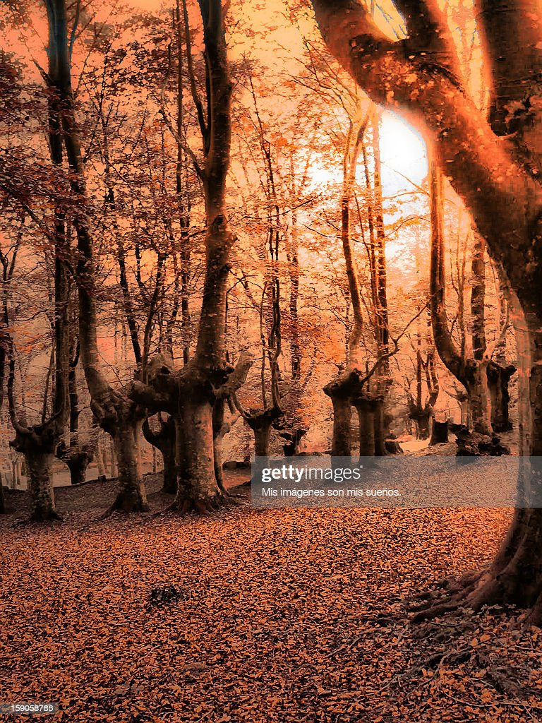 Paleta de otoño : Stock Photo