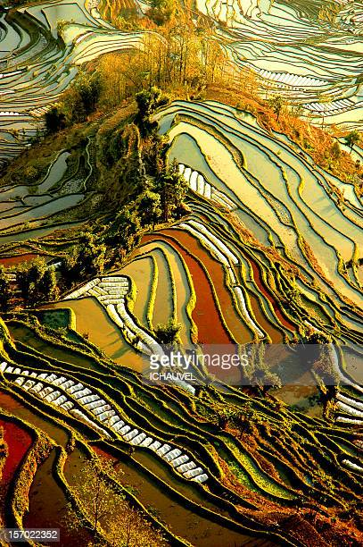 Palette de couleurs rizi?res yuang yuang