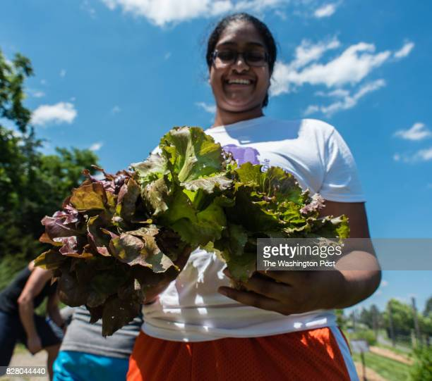 Pallavi Kanumuru who was in Willowsford visiting relatives shows off the lettuce she picked in the garden The YouPick Garden offers residents the...