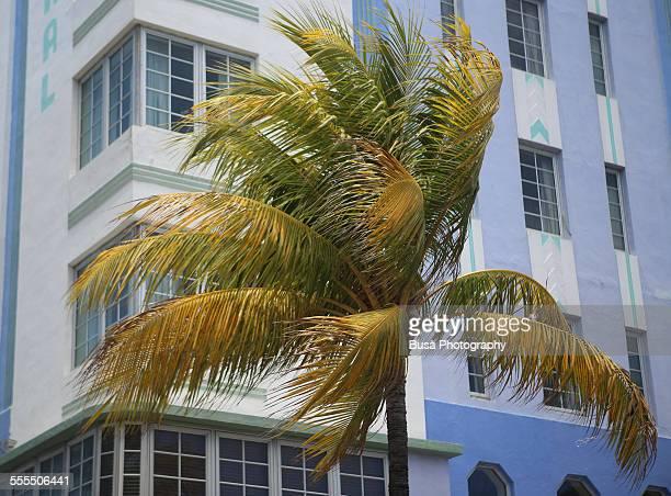 A palm against an art deco building in South Beach