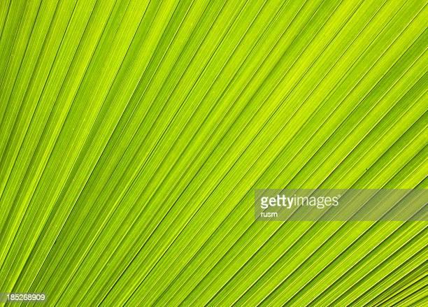 Palm fondo de