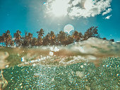 Underwater view with water edge on palm beach