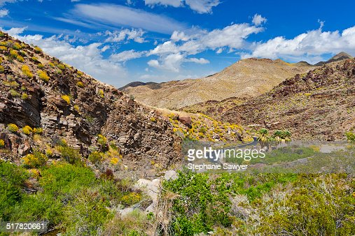 Palm Canyon View