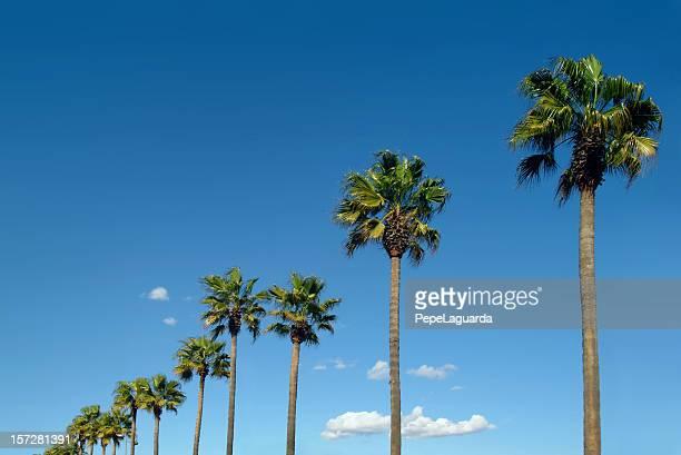 Palm-Laufwerk