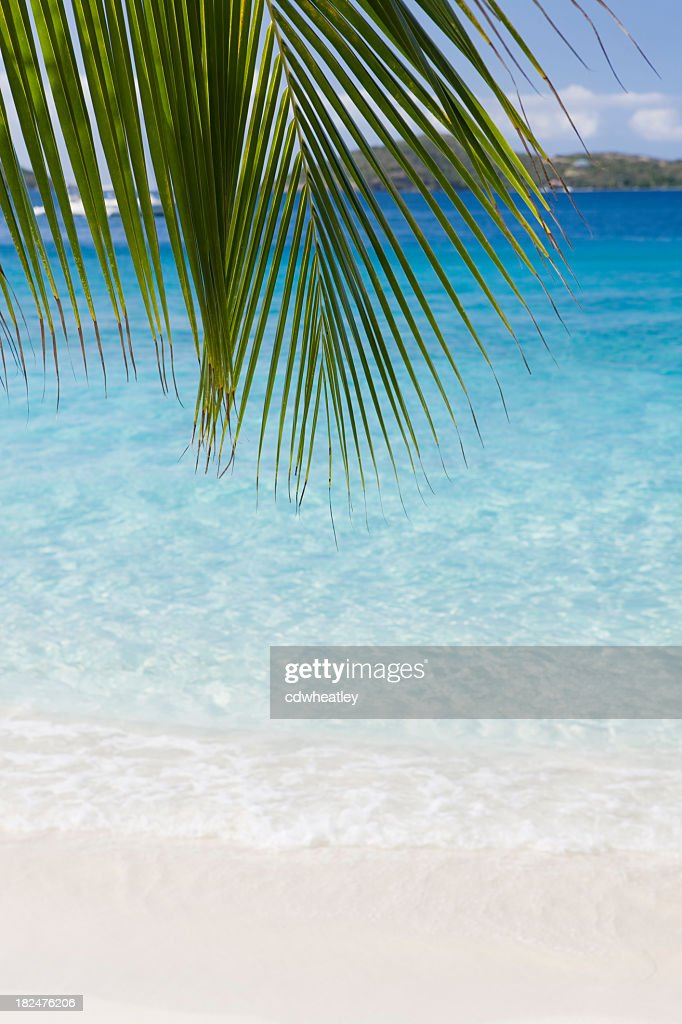 palm frond on the perfect Caribbean beach : Stock Photo