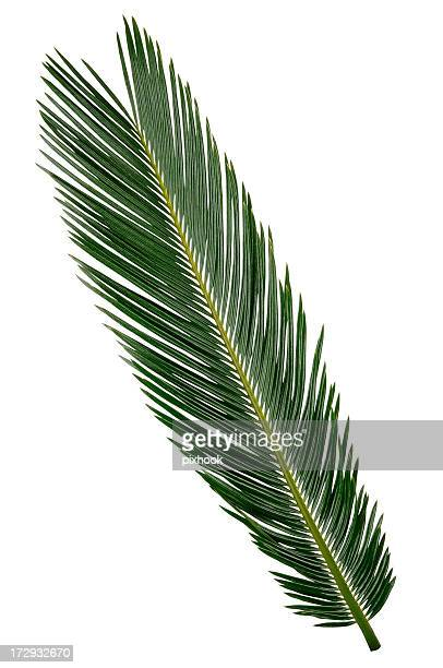 Palm Blattfiedern mit Path