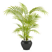 palm in the pot at the white background