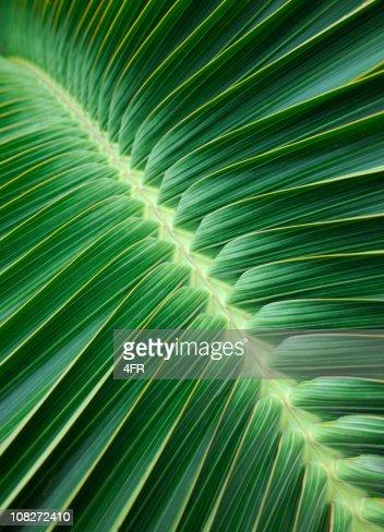 Palm Leaf Background (XXXL)