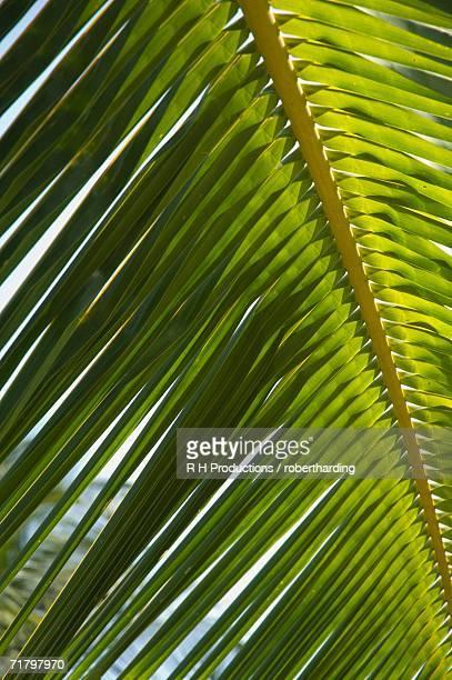 Palm leaf, Nicoya Pennisula, Costa Rica