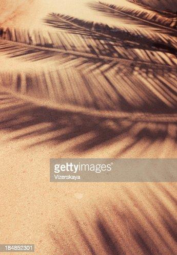 シュロの葉柄の影で接地