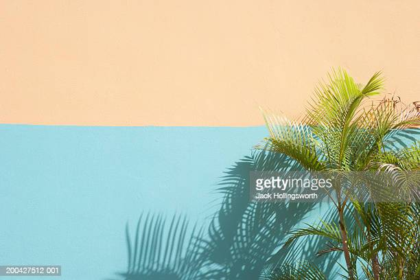 Palm leaves against a wall