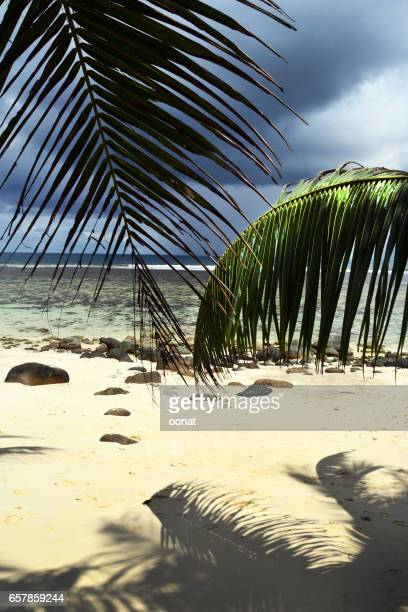 Palm leaves hanging over beach