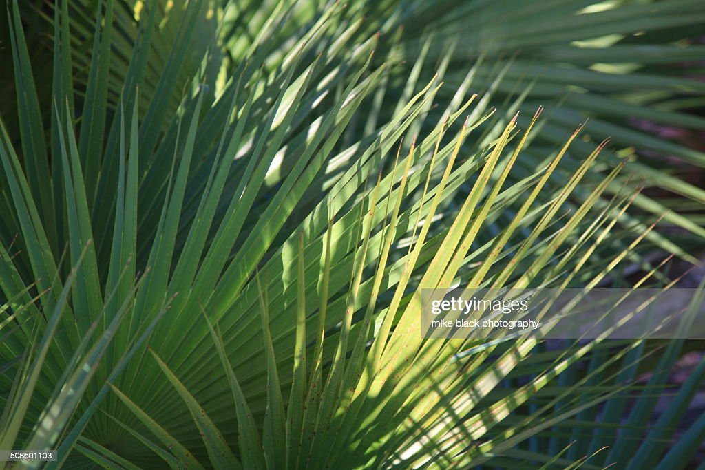 Palm leaves in sun and shade : Stock Photo