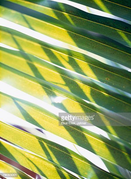 Palm leaves photographed against the light.