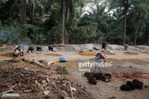 Palm oil making
