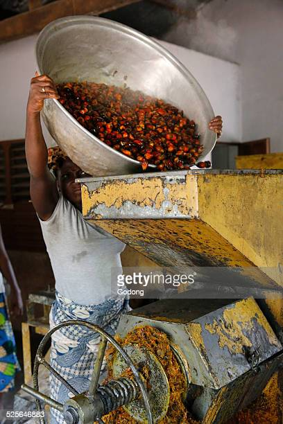 Palm oil making