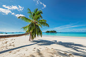 White sand beach with palm tree on tropical island in Caribbean sea. Summer vacation and holiday travel concept.