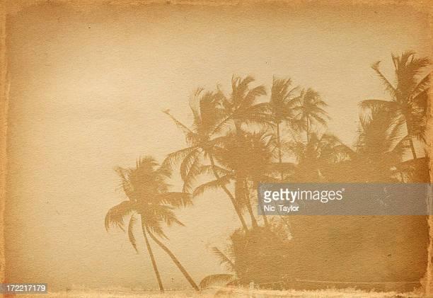 Palm-Papier