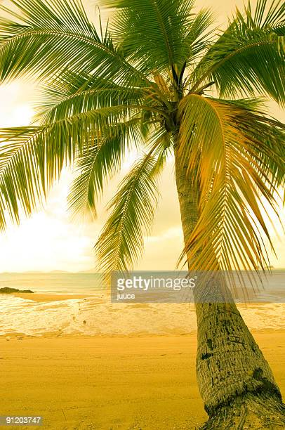 Palm Sands