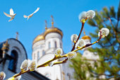 Palm Sunday. Willow branch  with catkins on the background of Orthodox church and the flying pigeons