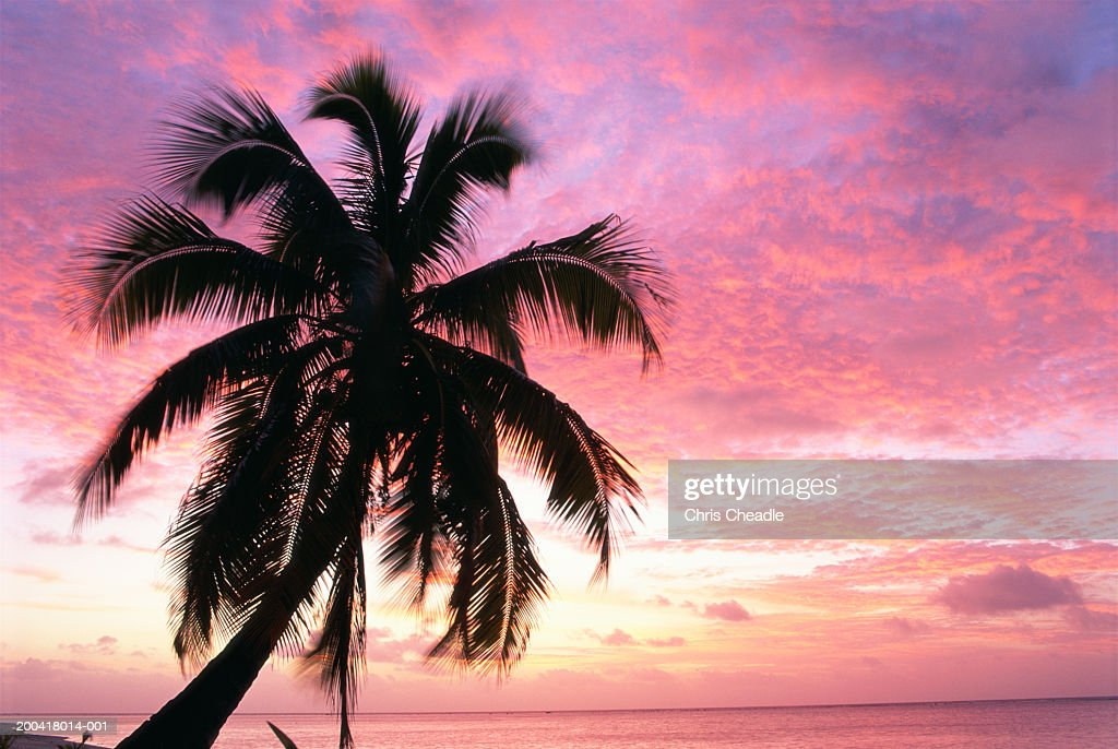 Palm tree against red sky at sunset : Stock Photo