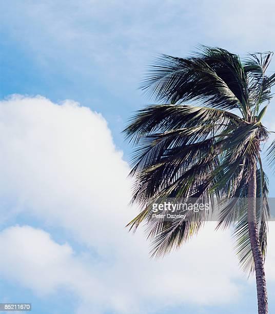 Palm Tree Against stormy sky