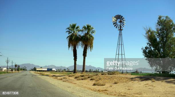 Palm tree and American style wind turbine at Blythe, Riverside county, California, USA
