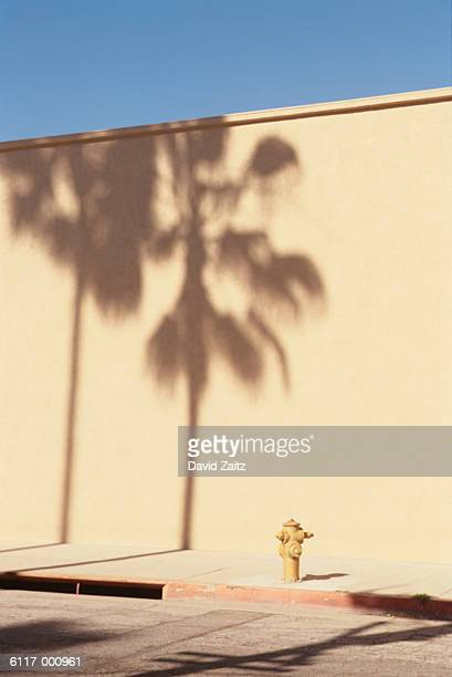 Palm Tree and Fire Hydrant