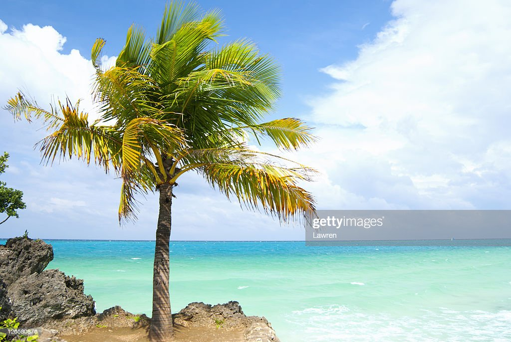 Palm tree and ocean : Stock Photo