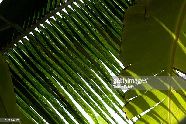 Palm tree and other leaves