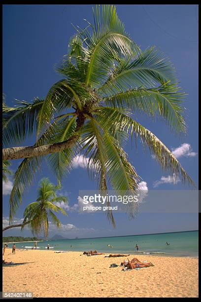 Palm tree and sandy beach on French Polynesian islands Wallis and Futuna