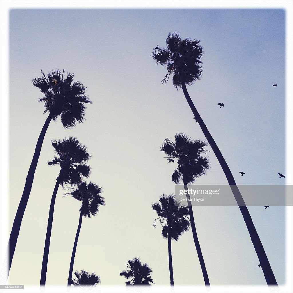 Palm tree and seagulls